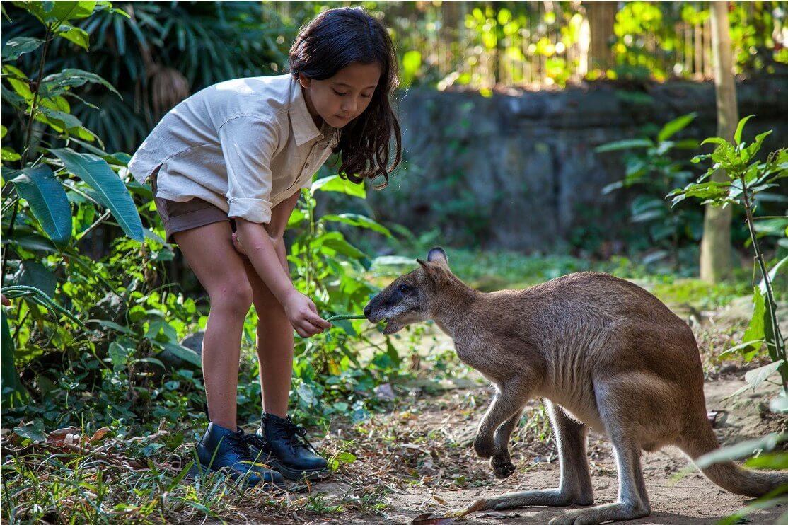Фото Bali Zoo