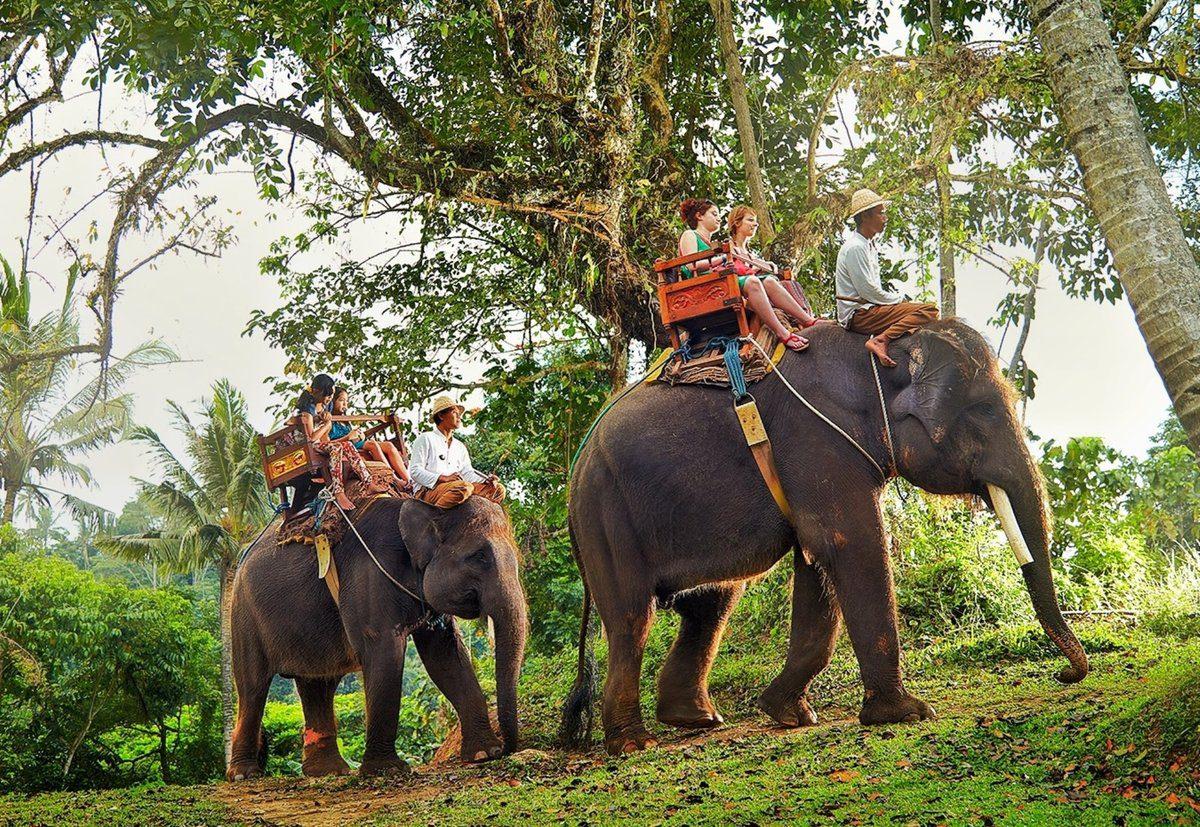 Фото слонов на Бали