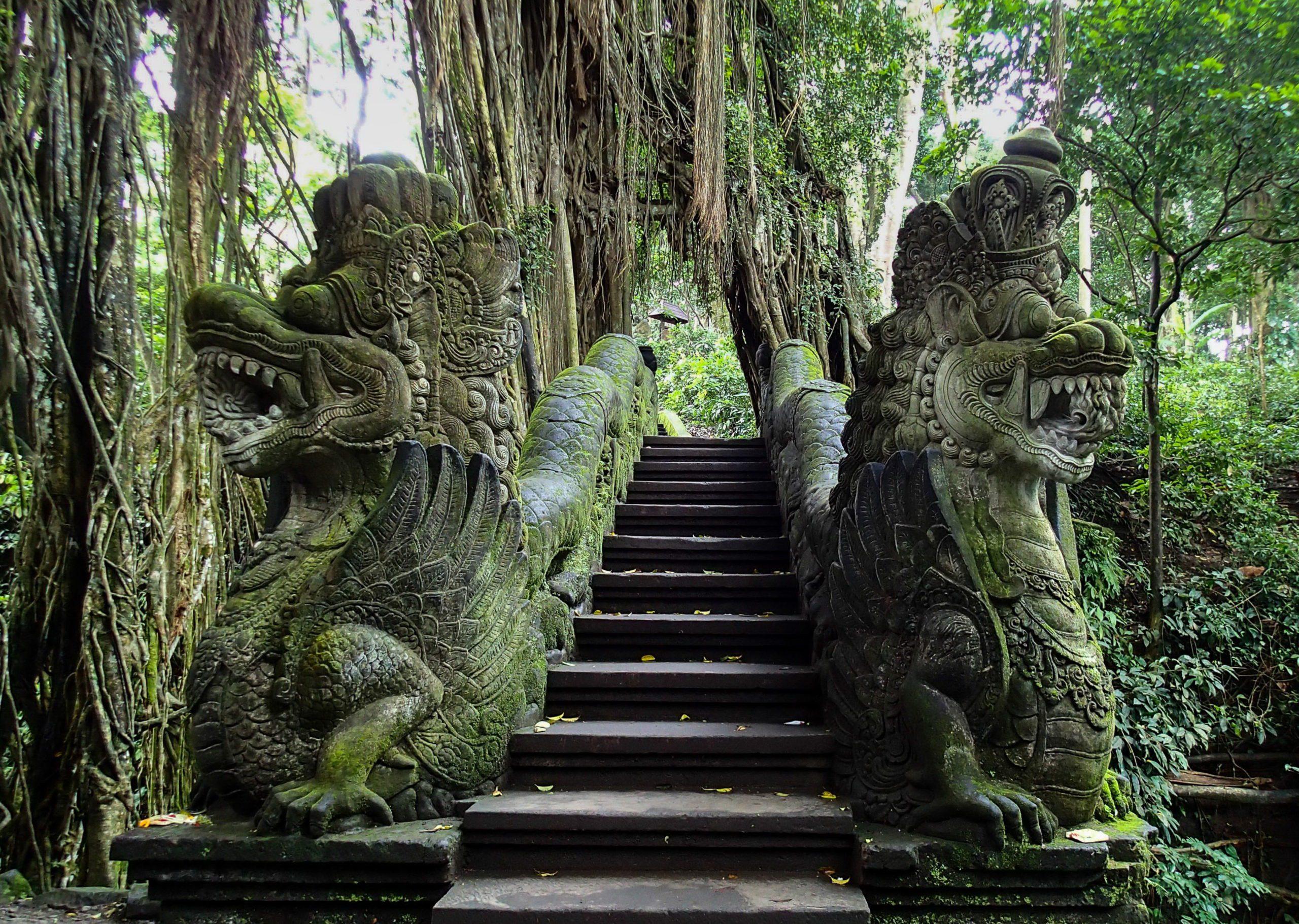 Фото Леса обезьян
