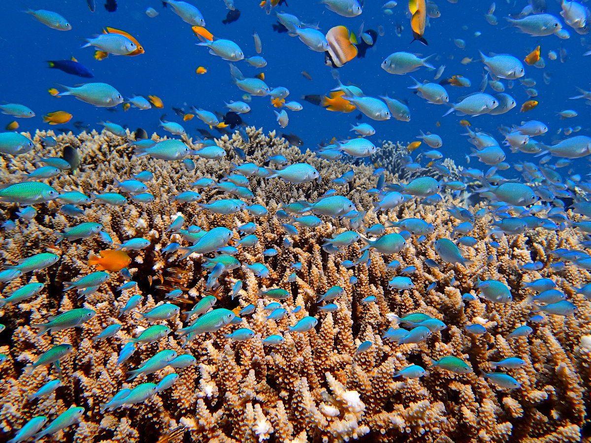 Фото рифа Амед