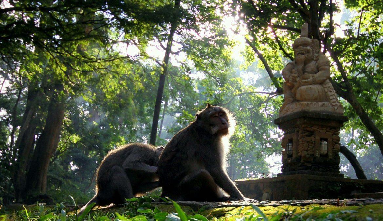 Внутри обезьяньего леса