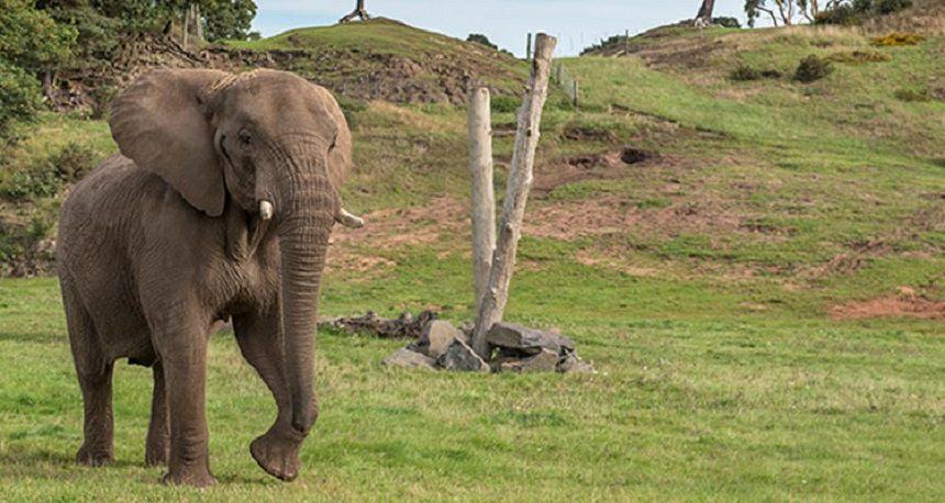 ТОП-15 лучших развлечений Бали Elephant Safari Park