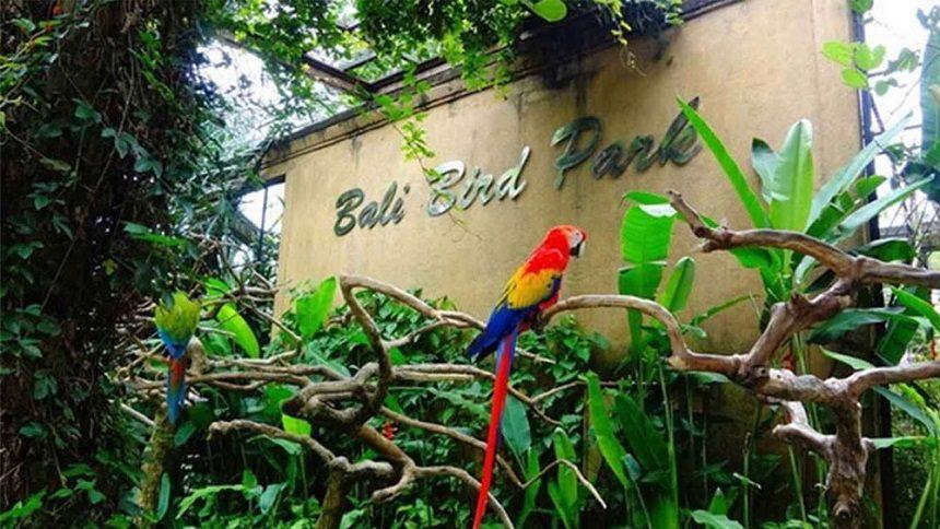 ТОП-15 лучших развлечений Бали Bali Bird Park
