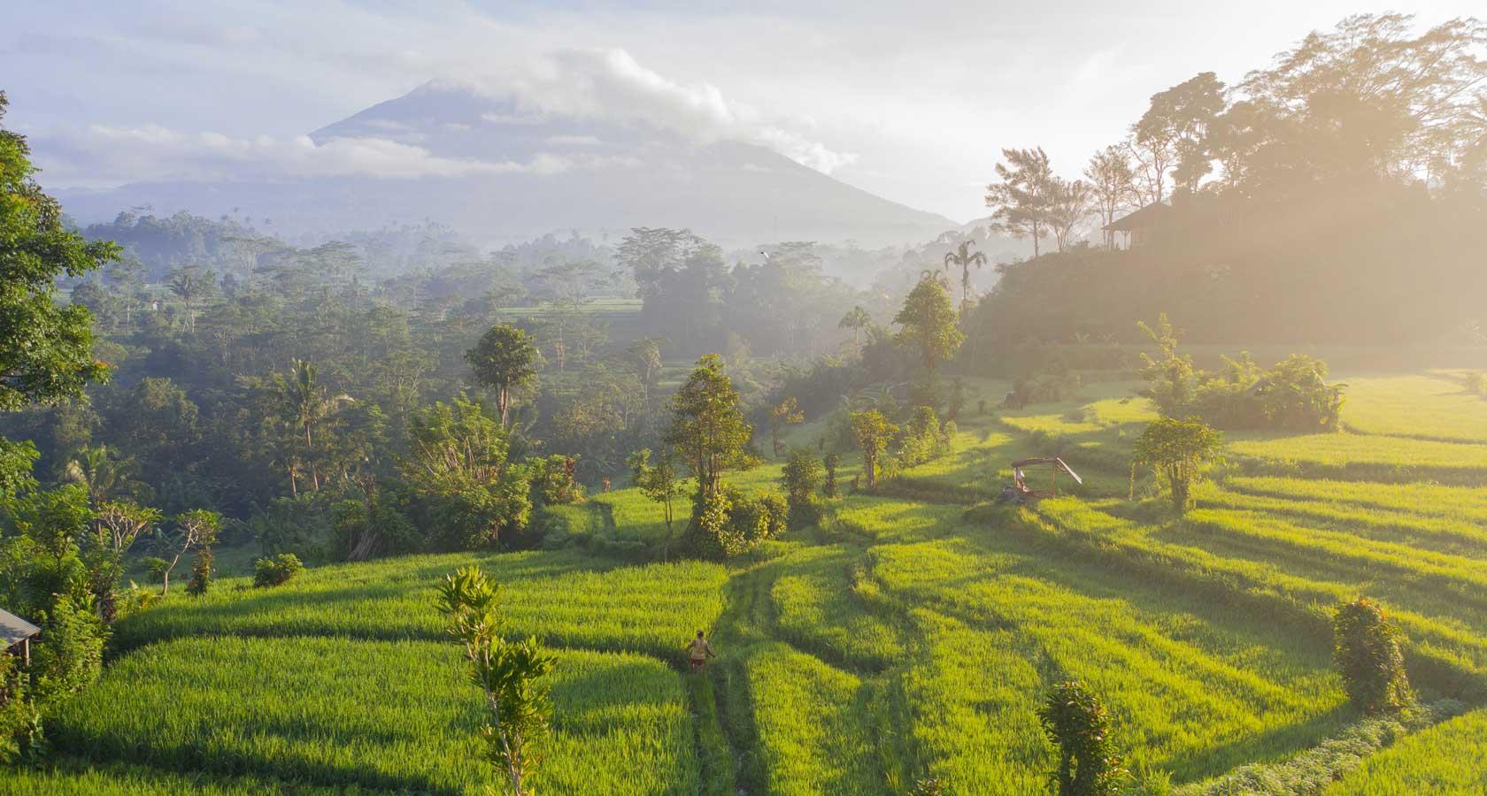 Фото кофейной плантации