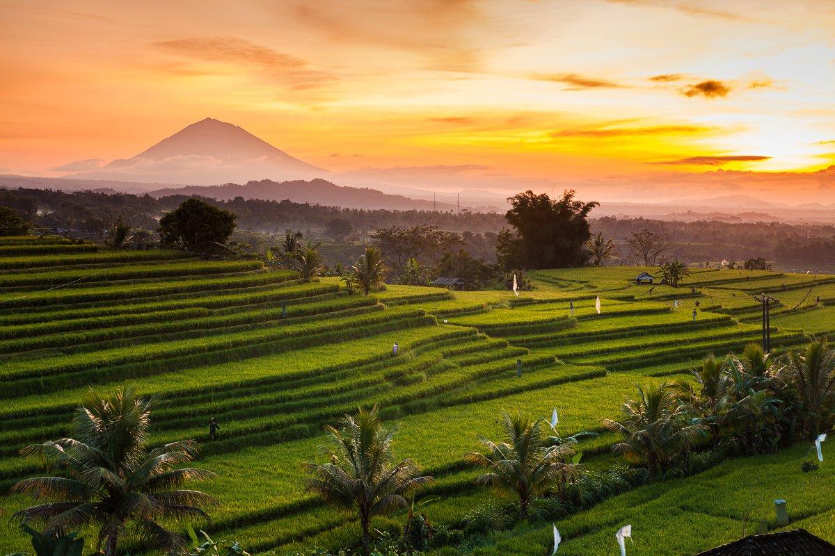Фото рисовых полей