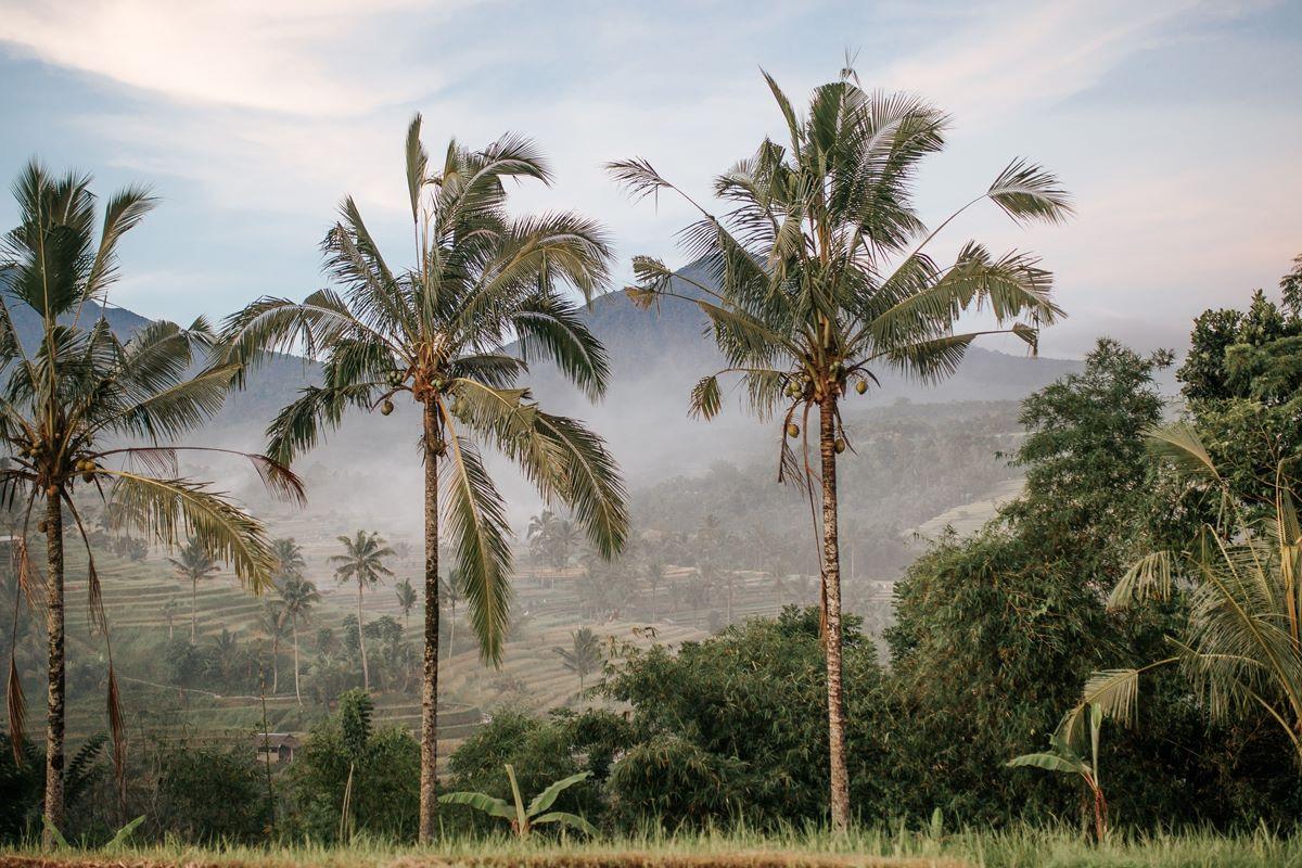 Плантация на Бали