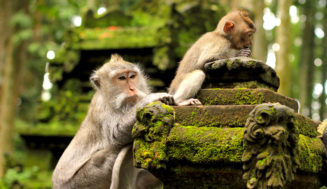 Лес обезьян в Убуде: правила поведения, советы, как добраться