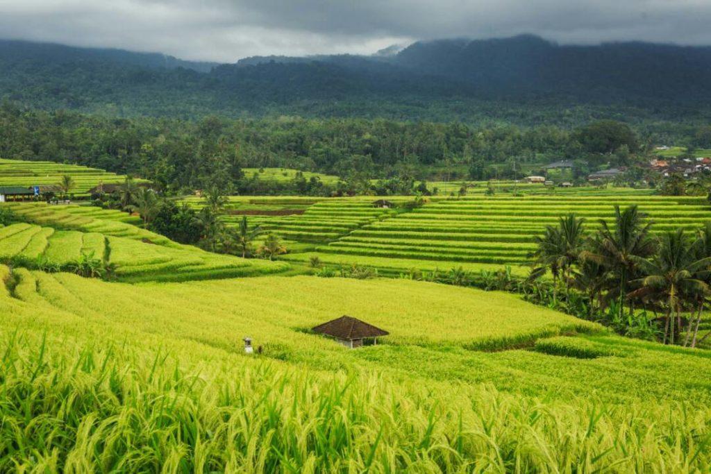 Табанан на Бали
