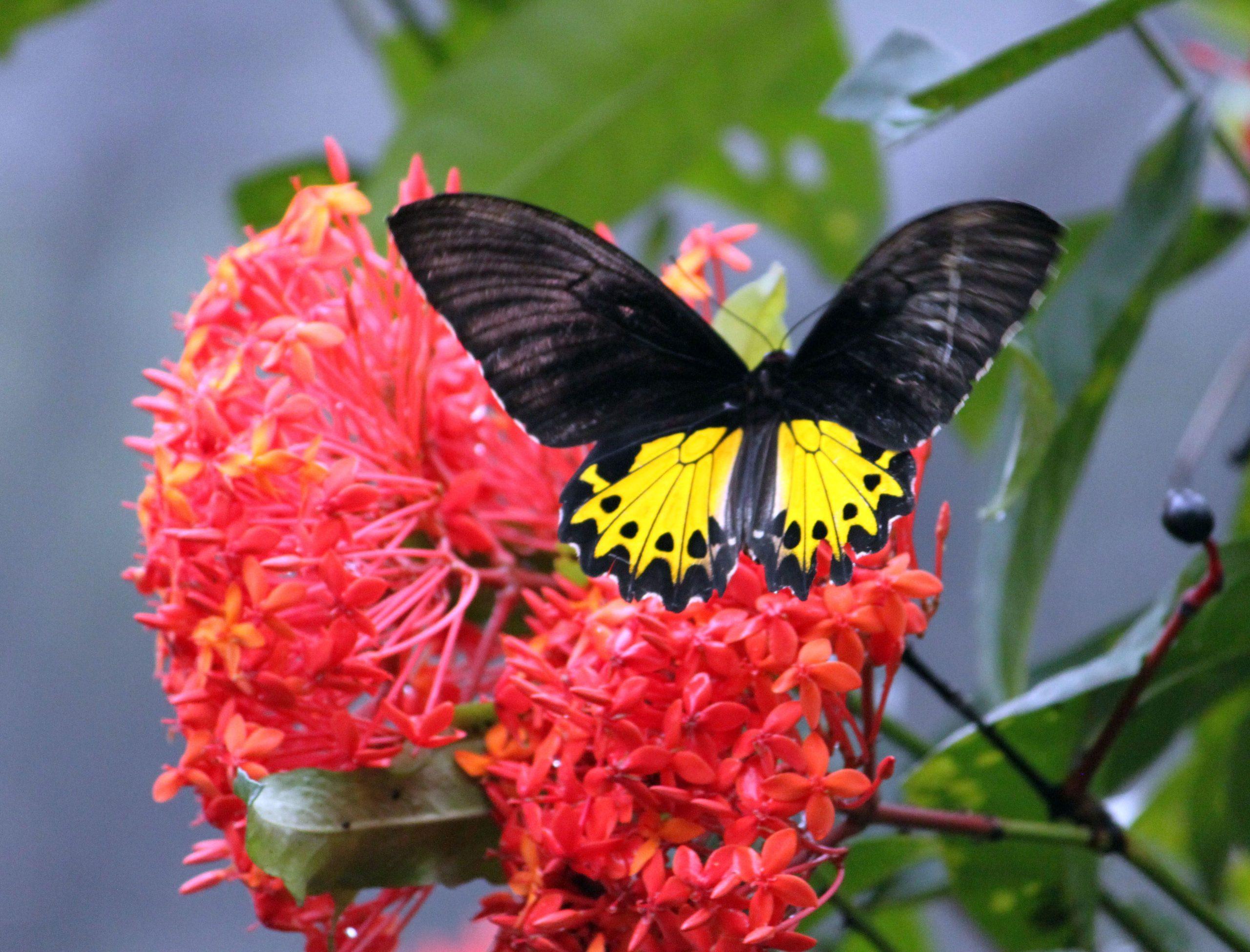 Бабочки на Бали