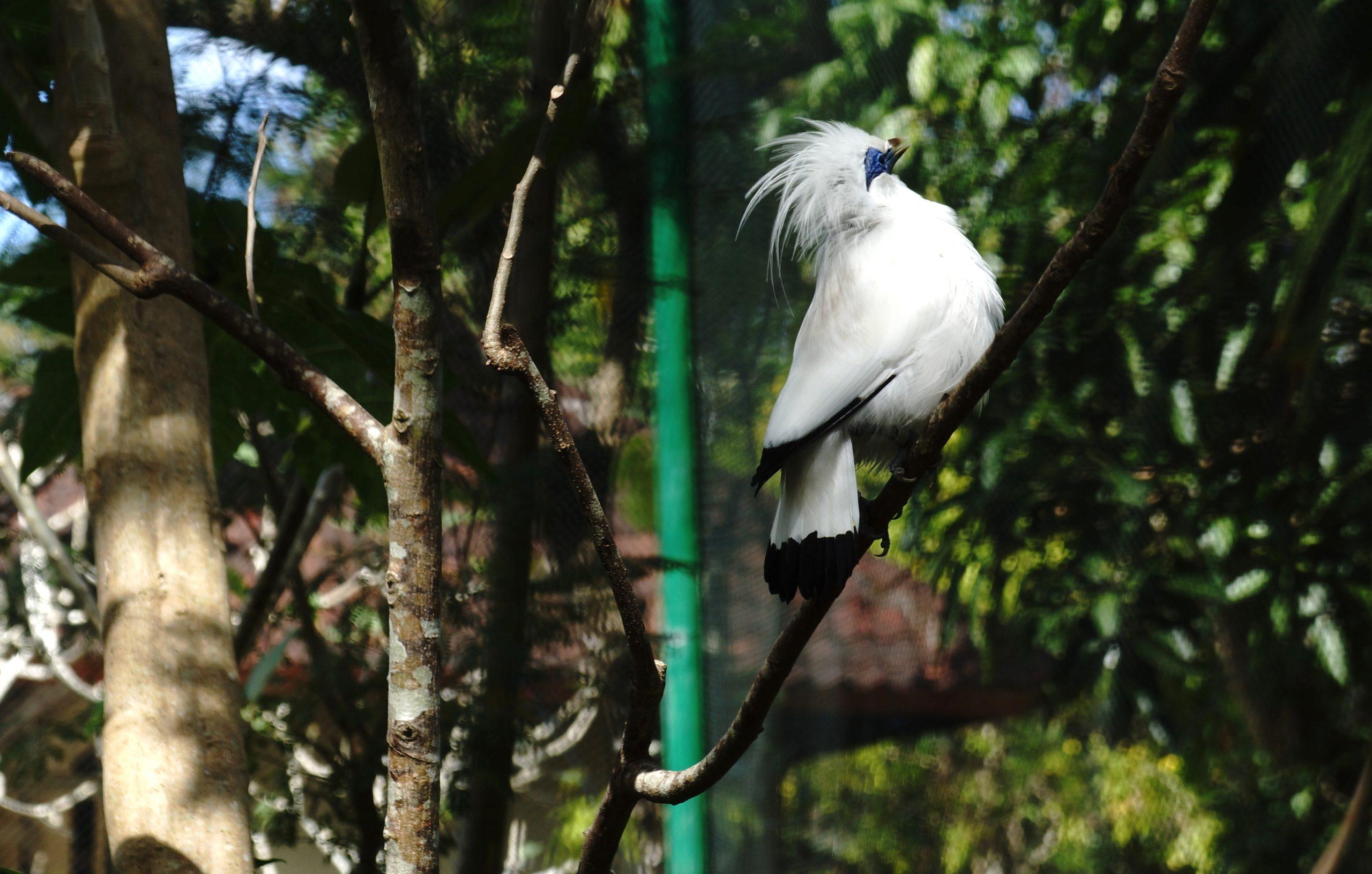 Балийская птица на Бали