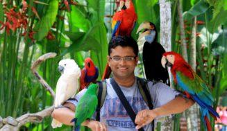 Животные на Бали: опасные и не очень