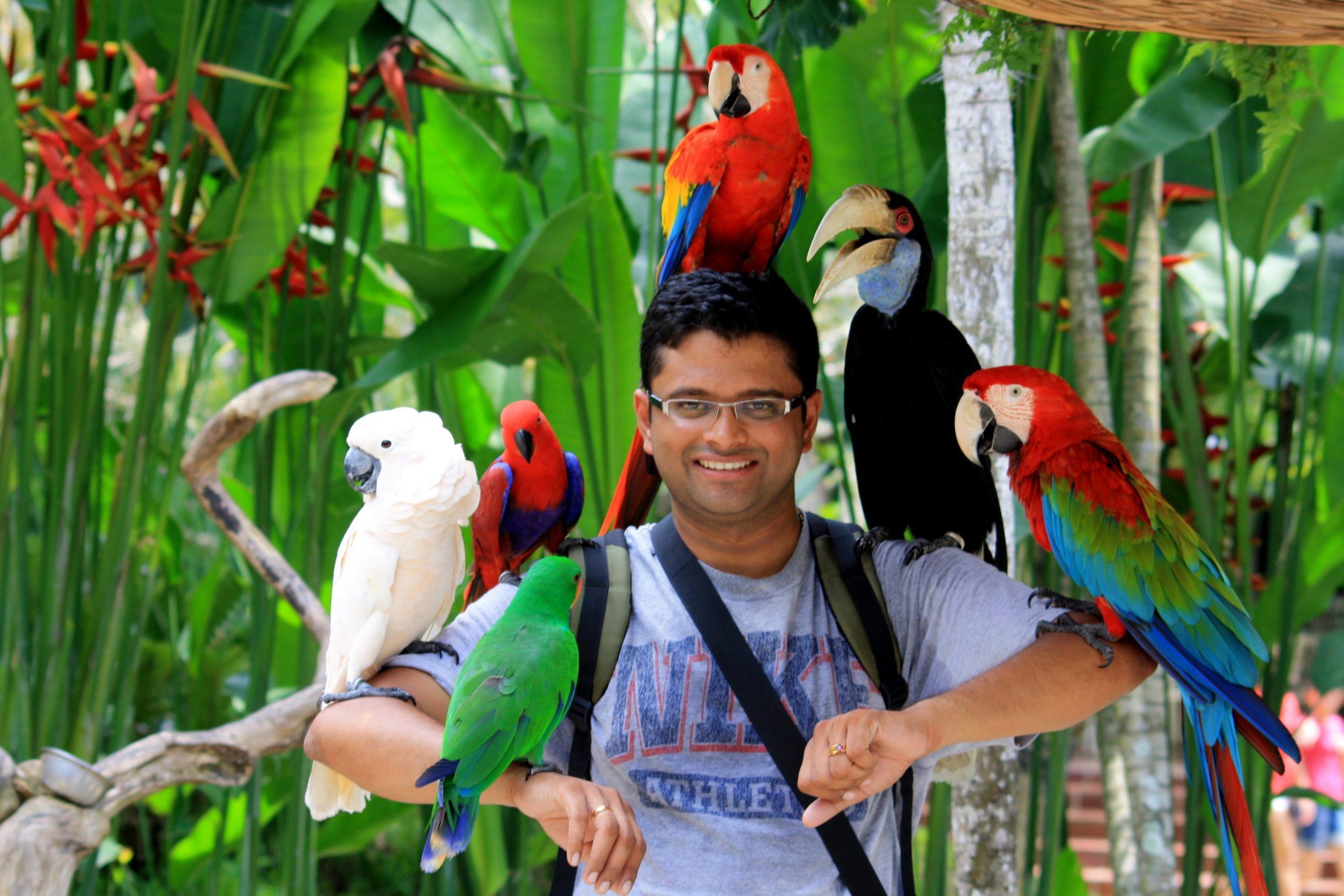 Животные на Бали