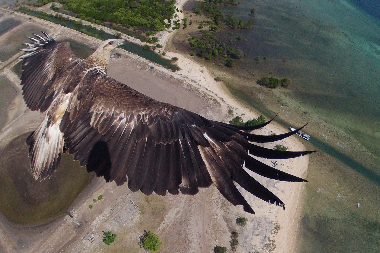 Змеиный орел на Бали