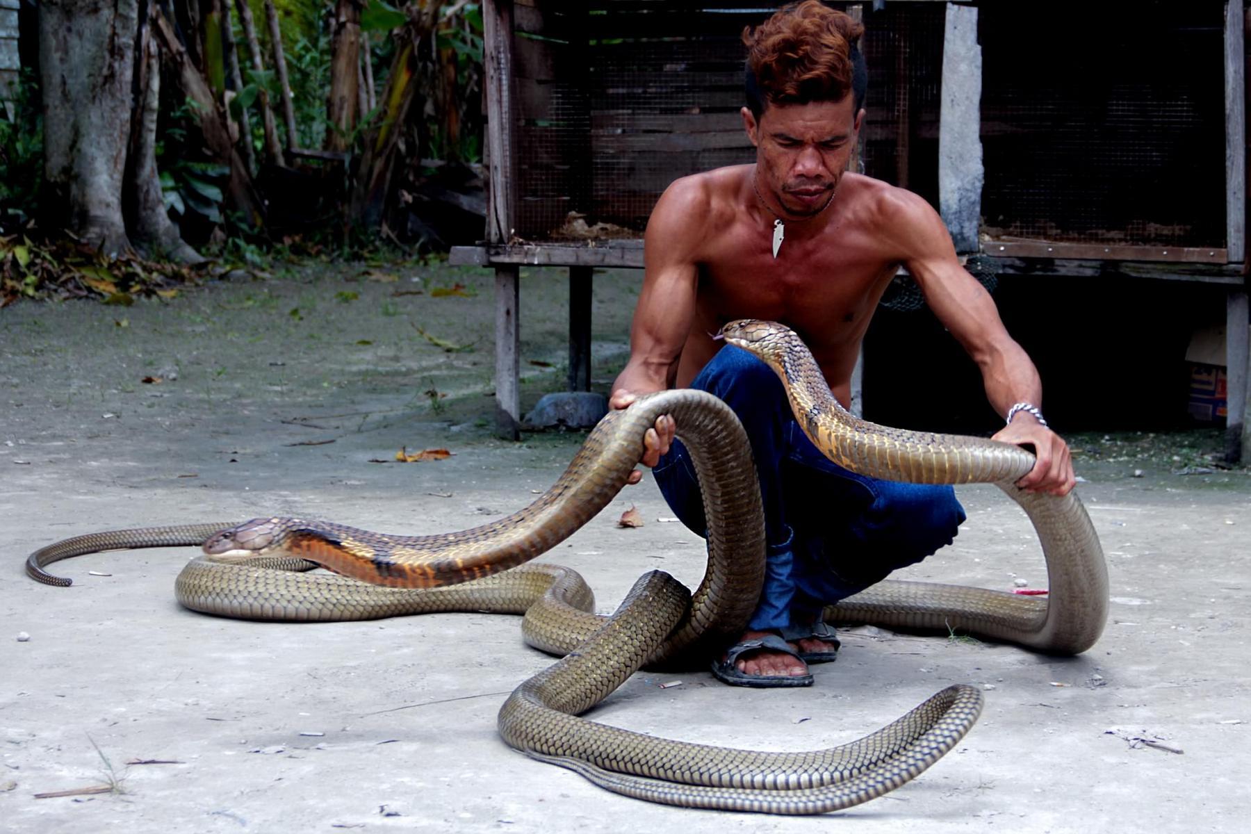 Страхование при укусе змеи