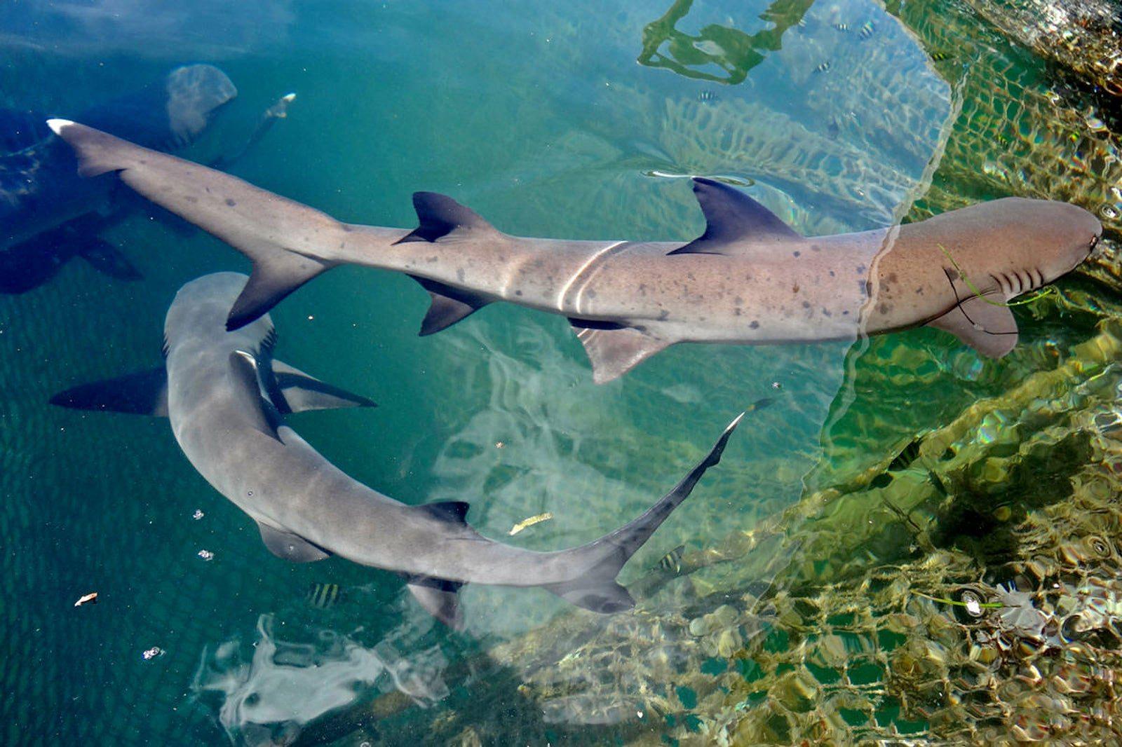Какие акулы обитают у берегов Бали