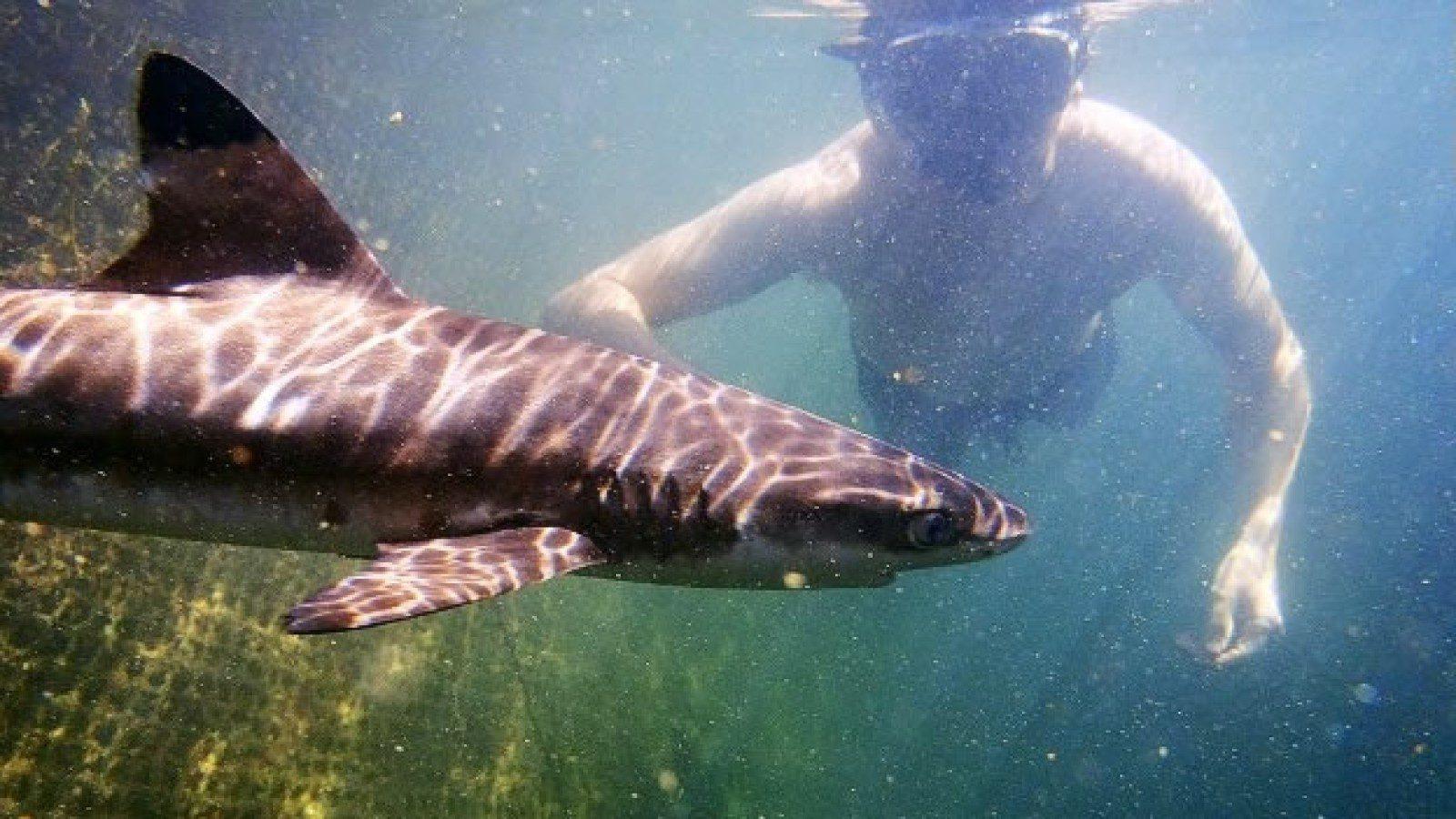 Акулы, которые водятся на Бали