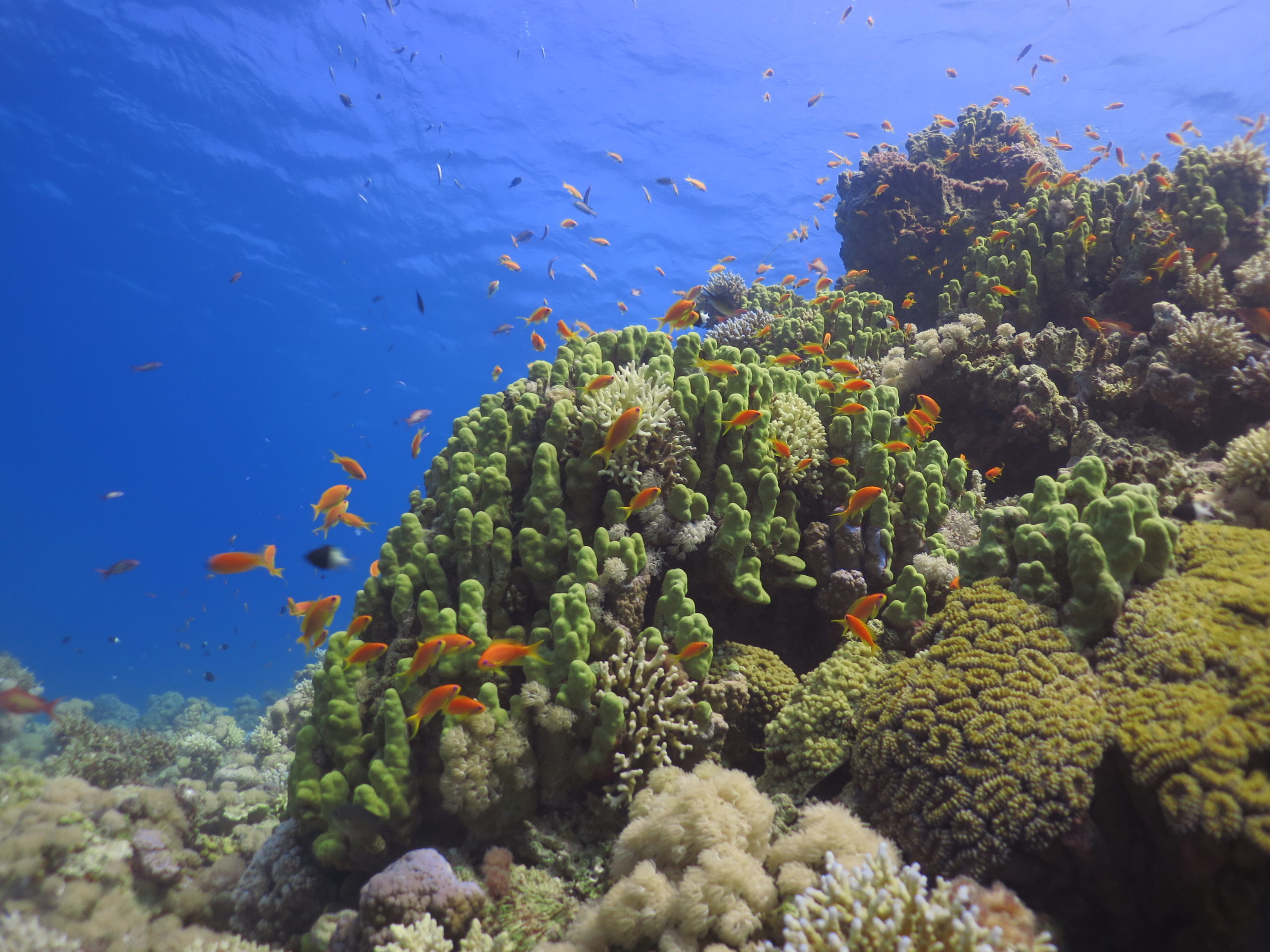 Подводные погружения на Uyah Reef (Уйях Риф)