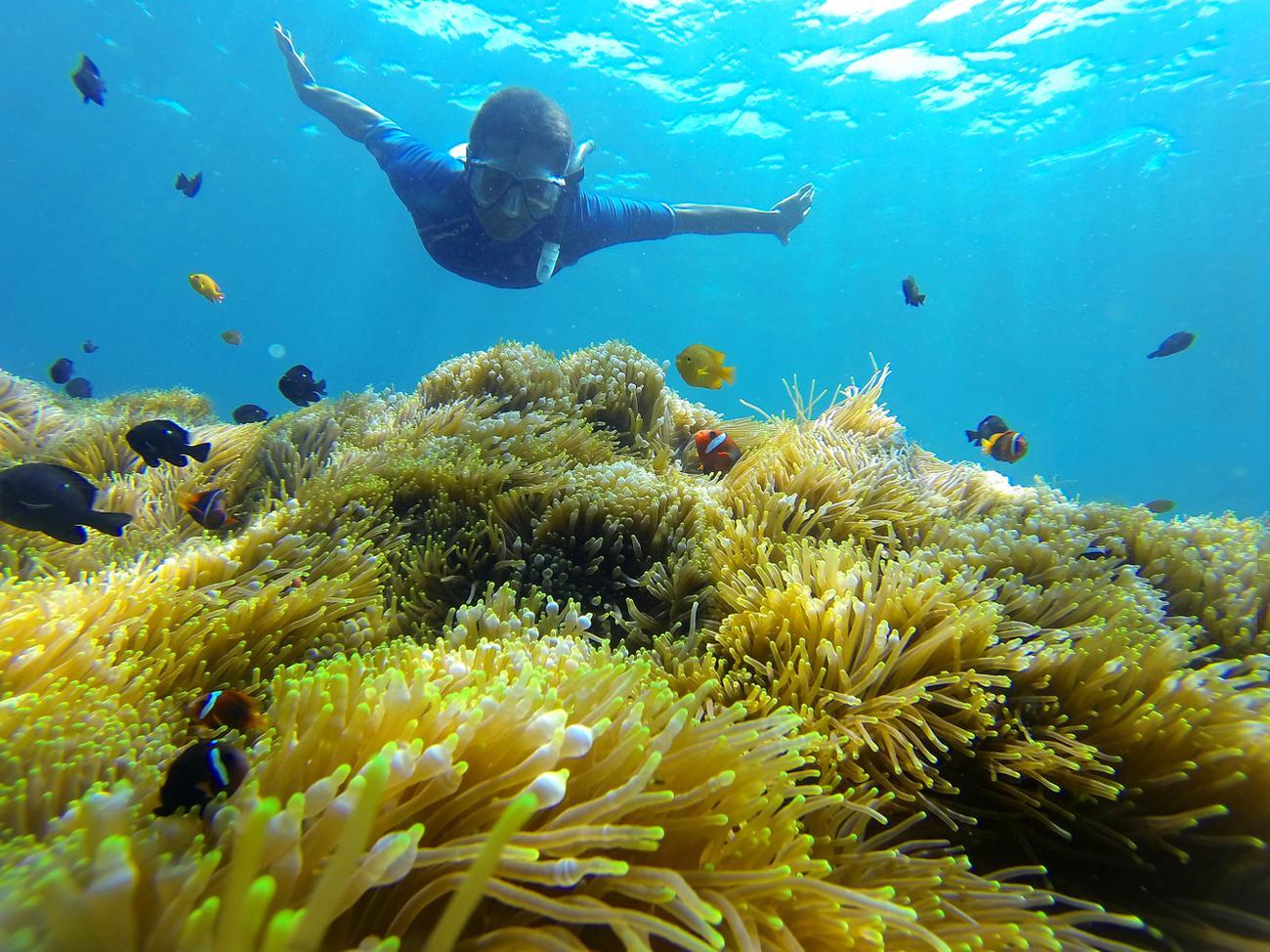 Дайвинг на Bunutan Reef