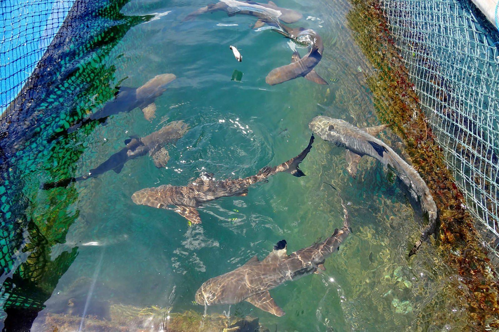 Плавание с акулами на Бали