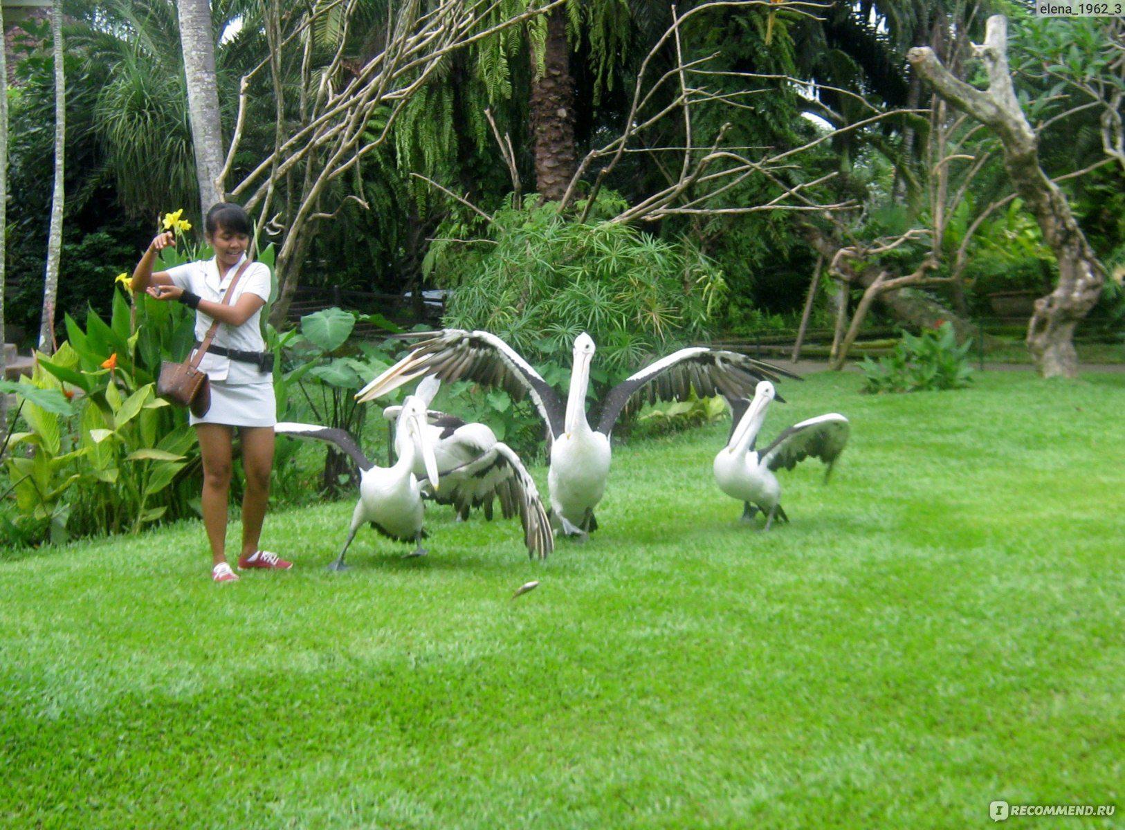 Досуг в парке птиц и рептилий
