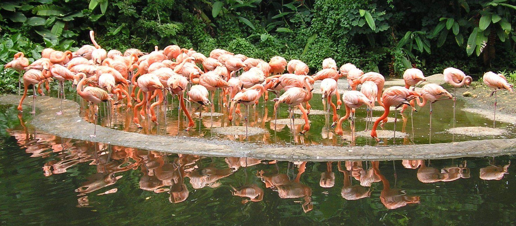 Окрестности парка птиц и рептилий