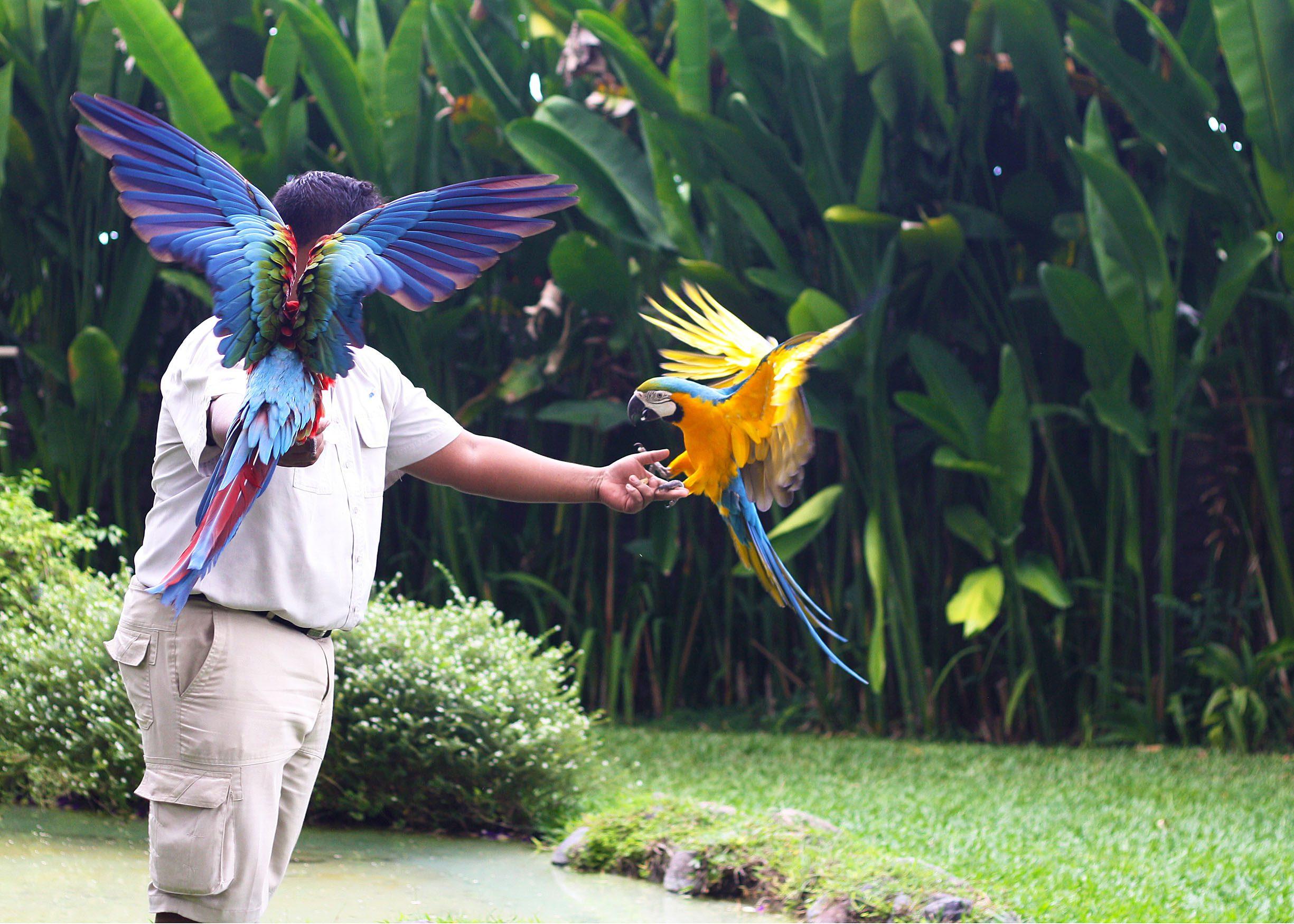 Обзор парка птиц на Бали