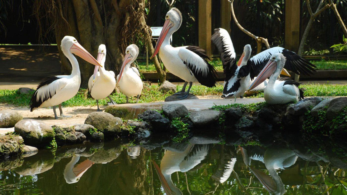 Парк птиц и рептилий в Убуде