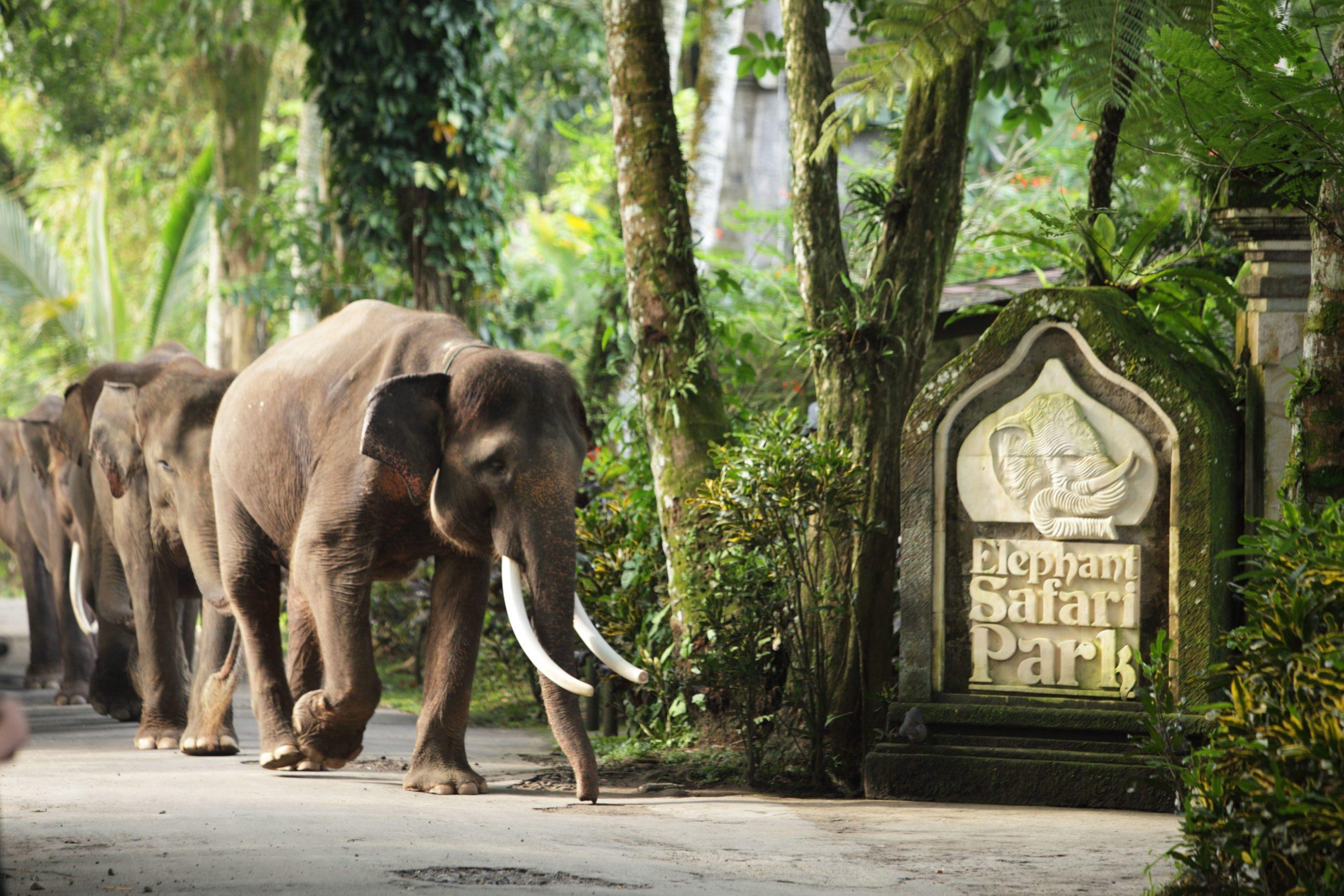 Парк слонов в Убуде