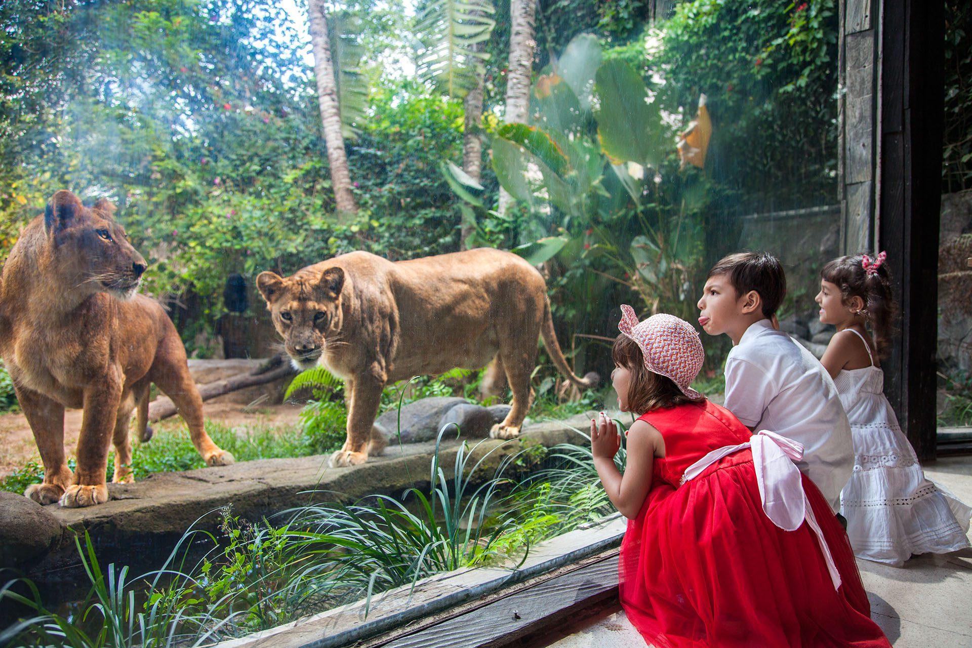 Зоопарк в Убуде