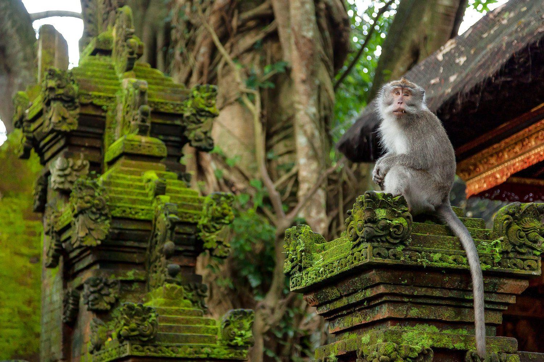 Так выглядит лес обезьян на Бали