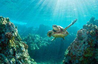Фото черепахи на острове Бали