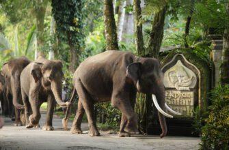 Фото парка слонов